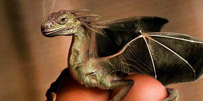 Matar al dragón (ilustración por Jan Oliehoek)